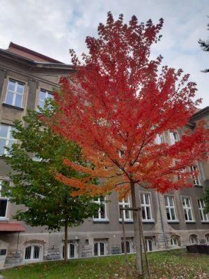 podzim na wagnerce